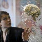A real human brain suspended in liquid with a to-scale skeleton, central nervous system and human silhouette carved into acrylic, at a science exhibition in Bristol, England. The display has approval by the Human Tissue Authority including full and personal consent from the donor. (Ben Birchall/PA Wire)