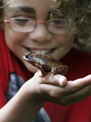 Joaquin Shinback from Malahide, County Dublin, checks out a common frog during the launch of Wild Child Day, which formed part of National Heritage Week 2010.
