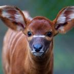 Image: Dublin Zoo/Patrick Bolger Photography 2012
