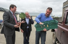 €3.7m in grants for horticultural producers