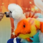 Yes, that's a fish painted on a poodle. And? (Photo by CDSB/Chinafotopress)