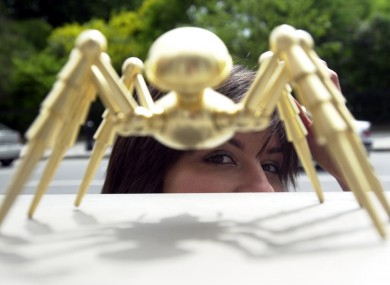 One of the famous Golden Spiders