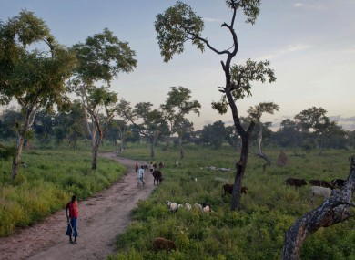 A man watches over his cattle and goats as they graze in Yida camp, South Sudan, Sunday, Sept. 16, 2012. Yida refugee camp is home to thousands of people.