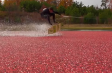 The YouTube Top 10: Because wakeskating in a cranberry bog looks amazing