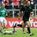 Clare referee Rory Hickey has a companion as he runs around officiating in Páirc Uí Chaoimh.