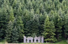 '2,500 jobs jeopardised' by sale of Coillte's harvesting rights – report