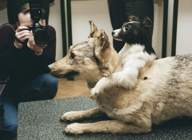 The history of the two-headed dog experiment · TheJournal.ie