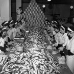 Slicing and cleaning herring for 'rollmops'. a traditional German hangover remedy, in a fish factory in Cuxhaven, Germany in 1951. (AP Photo/Henry Brueggemann)