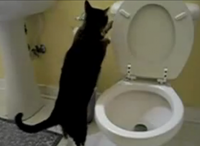 A cat flushing a toilet, as seen on YouTube