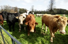 CSO farming figures show sheep numbers up 7pc, potatoes down 13.1pc