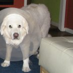 Sociopaths rarely do. Unlike this poor pooch. (Image: cote/Flickr)