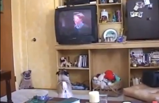 Dog gets emotional watching a film about lost pets