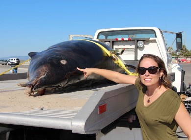 Heather Doyle, director of the Heal the Bay's Santa Monica Pier Aquarium pointing out shark bites found on the beached Stejneger's Beaked Whale.