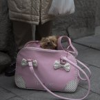 A dog sits in a bag while waiting in the queue to be anointed outside the Saint Anton church in Madrid Friday. It is the animal's patron saint day in which thousands of people all over Spain bring their pets to churches to be blessed. <span class=
