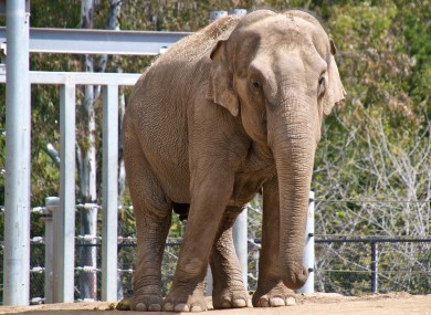 This is an elephant, much like the one that destroyed this house