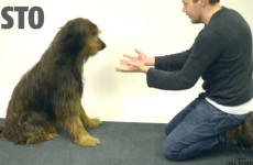 'Dogs confused by magic trick' is the funniest thing you'll see today