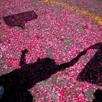 Shadows of flag-waving supporters are cast on flower petals thrown by them as India''s ruling Congress party president Sonia Gandhi arrives to file her nomination papers for the upcoming general elections.<span class=