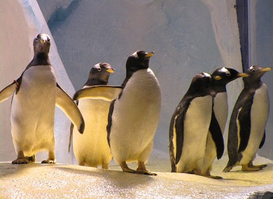 The penguin enclosure at Dingle Oceanworld.
