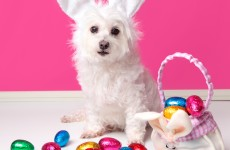 Here's why you definitely shouldn't let your dogs eat chocolate this Easter