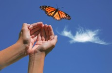 Butterflies to be released in remembrance service for those affected by the death of a baby