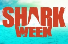 Shark Week: what is it and what is all the fuss about?