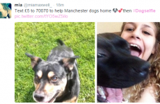 Here is the heartbreaking reason why people are sharing dog selfies on Twitter