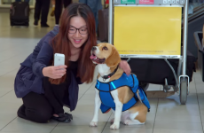 Meet the dog that works in an airport returning people's lost property