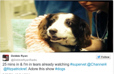 How a 12-year-old cocker spaniel reduced TV audiences to tears last night
