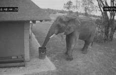 This video showing an elephant throwing rubbish into bin is going viral – but is it real?