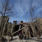 Filipino worker Alvin Gordo builds a Christmas tree which are being sold from P300 to P800 (about US$7 to US$18) each as people begin shopping for holiday season decorations at the outskirts of Manila, Philippines. Christmas is one of the most important holidays in this predominantly Roman Catholic nation. (AP Photo/Aaron Favila)<span class=