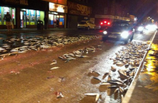 Belfast citizens warned not to eat mackerel found on the street after fish spill
