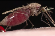 Another reason to fear climate change: Disease carrying mosquitoes