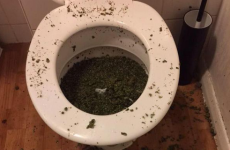 This is NOT how you flush cannabis down the toilet