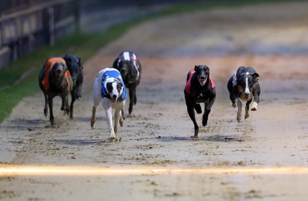 william hill greyhound racing
