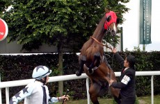 Jockey cleared of punching his horse before start of race
