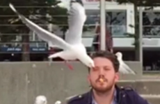 If you think our seagulls are bad, you haven't seen what's going on in Australia