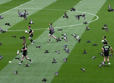 Kerry players and pigeons take to the pitch for the warm up