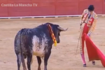 Animal rights activists protest killing mother of bull that gored matador to death