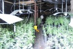 Nine arrested as drug dogs help sniff out �1.2 million worth of cannabis in planned raids