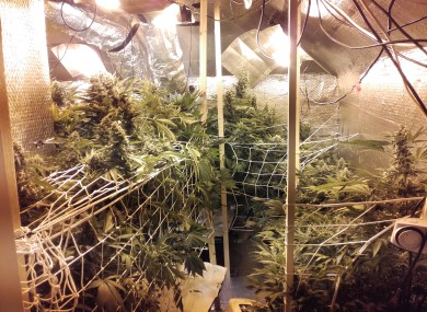 Some of the cannabis found today.