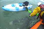 Youghal RNLI volunteers saving the stranded kayaker