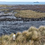 During peak breeding season on South Georgia Island, which is near the Antarctic Peninsula, there is said to be more wildlife per square foot than anywhere else in the world.<span class=