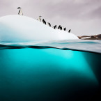 A gentoo penguin will make as many as 450 foraging dives per day, and with 24 hours of sunlight during December days, you'll have plenty of chances to see it happen.<span class=