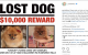 Paris Hilton is offering an €8,000 reward to get her friend's stolen dog back... it's the Dredge