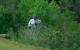 Sergio Garcia throws driver into bushes - and then has to go retrieve it