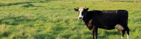 Case of BSE - or 'Mad Cow Disease' -  confirmed in Scotland
