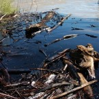 Oil from a ruptured ExxonMobil pipeline is seen in the Yellowstone River and along its banks near Laurel, Montana. (AP Photo/Matthew Brown)