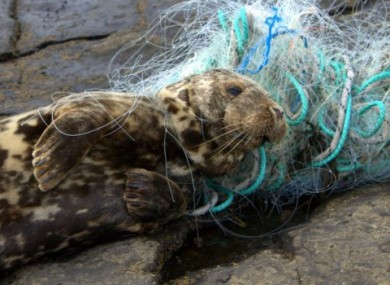 Some good news: this little guy was rescued after being caught in a net earlier this week.