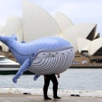 Maybe this is what whale evolution has in store for us, or not. (AP Photo/Rick Rycroft)