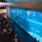IT holds more than 33,000 marine animals and the viewing panel holds Guinness World Record for largest acrylic panel. Pic: The Dubai Mall